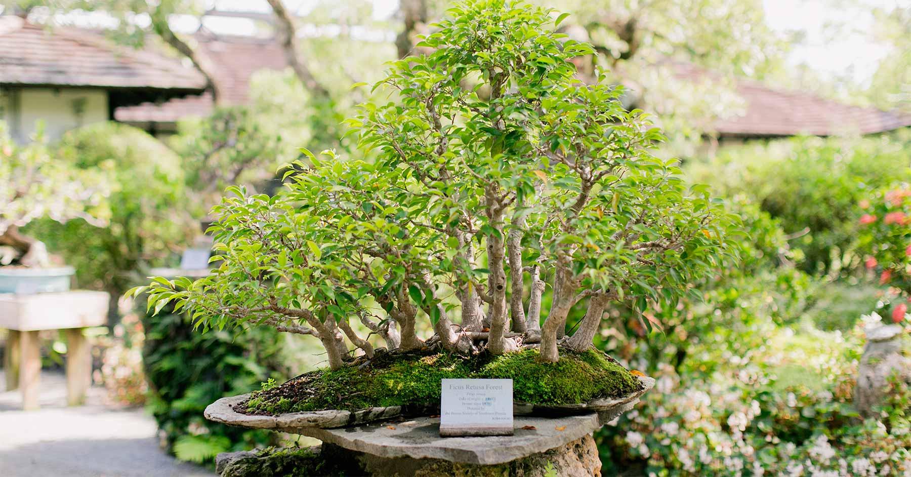 Bonsai Collection Morikami Museum And Japanese Gardens